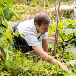 Chef-Jimmy-picking-herbs-from-Jeremy's-garden-cut