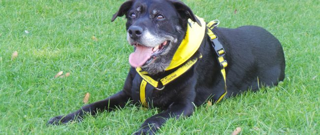 rescue dog Dogs Trust Shoreham