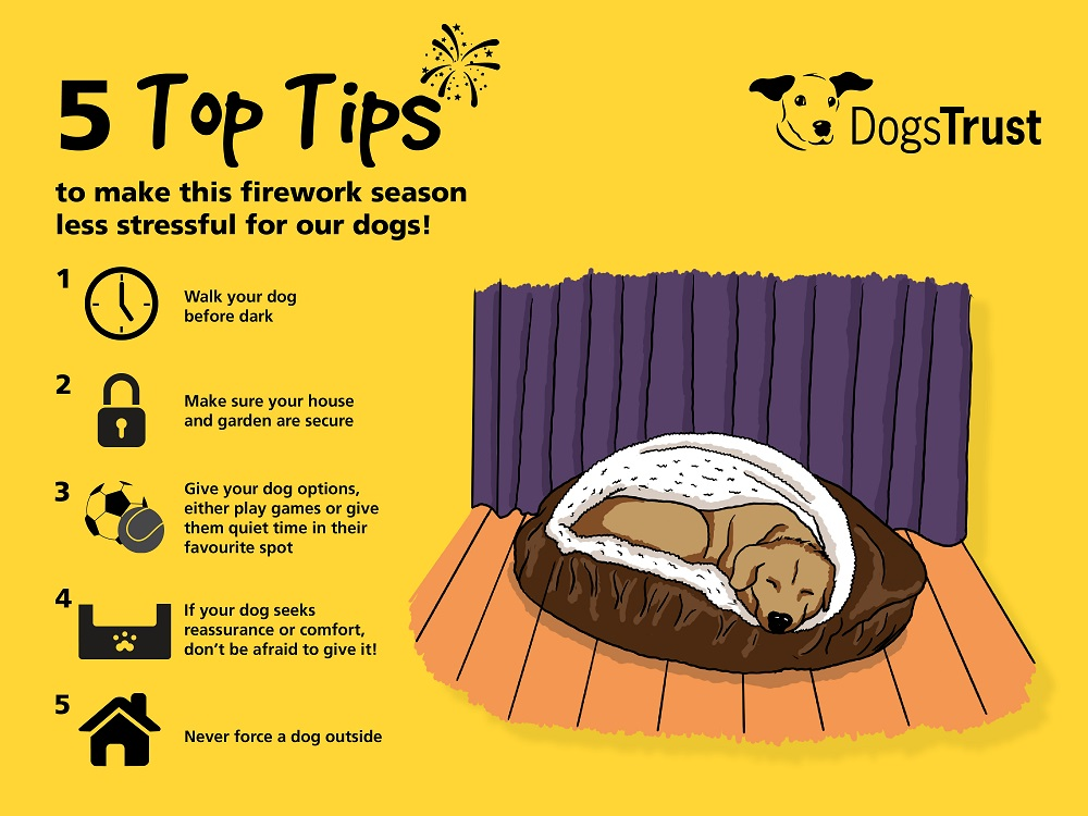 Dogs Trust Fireworks Advice Title Sussex Magazine www.titlesussex.co.uk
