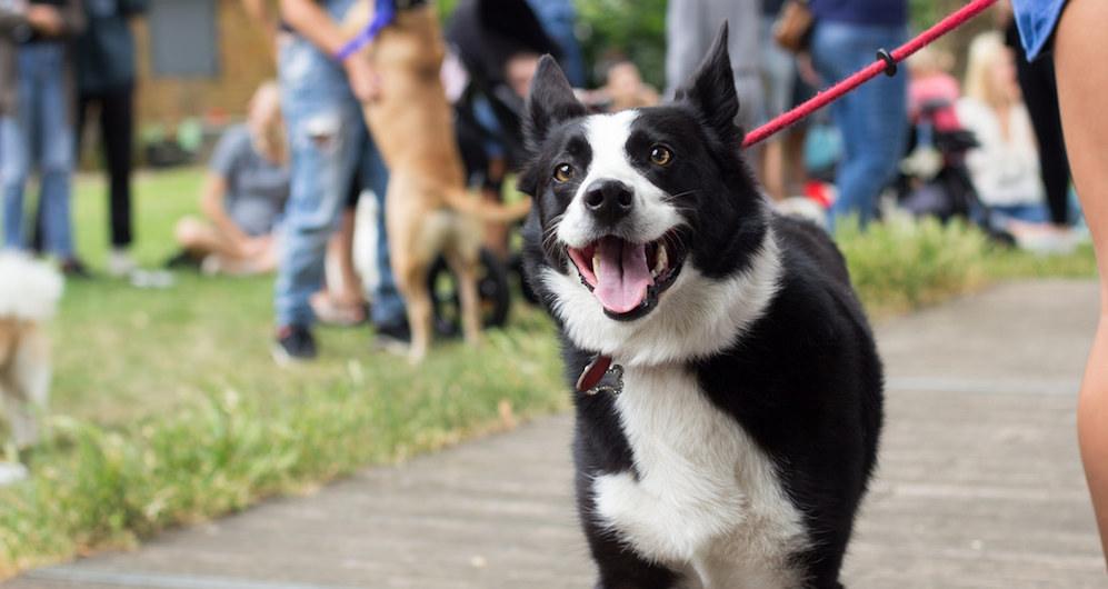 happy dog dog show on Title Sussex titlesussex.co.uk