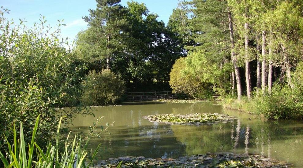 Alderwood Pond Title Sussex www.titlesussex.co.uk