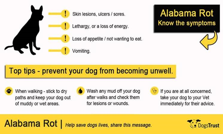 Signs to look for Alabama Rot Title Sussex Magazine www.titlesussex.co.uk