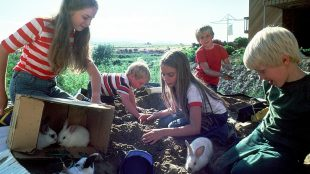 10 Free things to do in Sussex with kids on Title Sussex Magazine www.titlesussex.co.uk