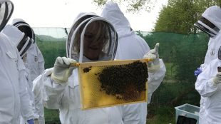 Sam Harrington-Lowe holding bees at Albourne Estate bee experience review on Title Sussex Magazine www.titlesussex.co.uk