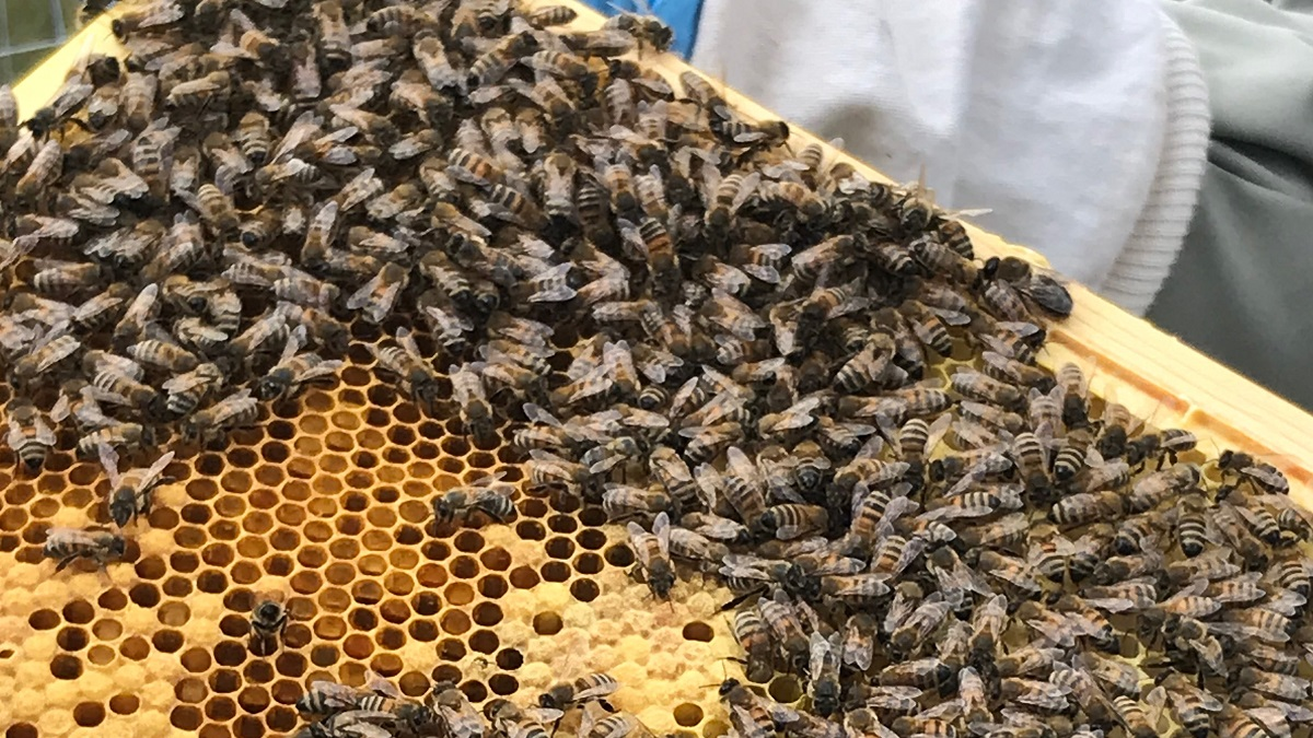 actual bees beekeeping experience at Albourne Estate review on Title Sussex Magazine www.titlesussex.co.uk