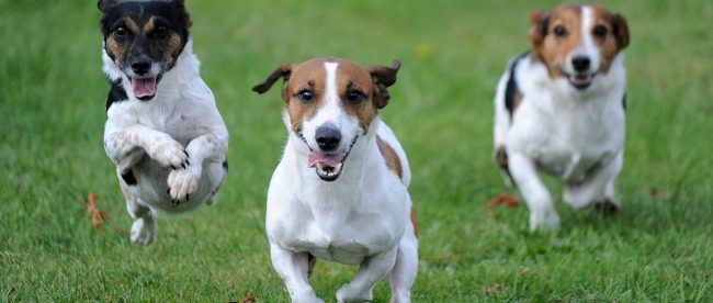 Autumn game fair Jack Russells article 2020 Title Sussex Magazine www.titlesussex.co.uk
